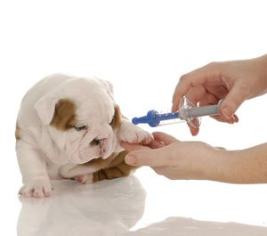 Анализы собак