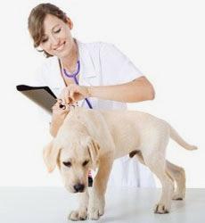 Диагностика состояния собак