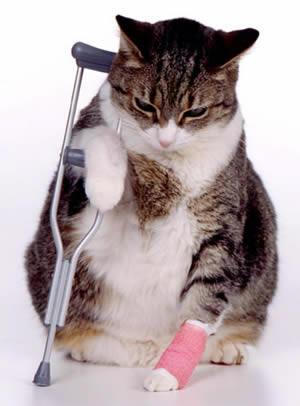 Ветеринар-травматолог вызов на дом в Москве - низкие цены
