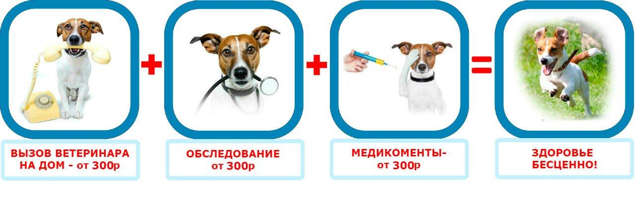 Вызов ветеринара на дом в районе метро Екатерининская