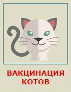 Вакцинация кошек на дому